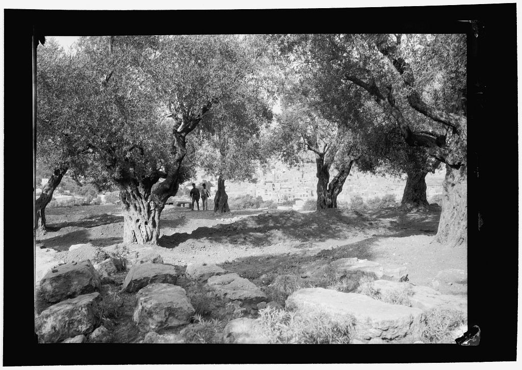 Large common grave of Jewish victims. Later the grave was destroyed